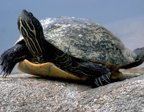 water-turtle-649667_1280
